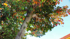 Natural Energy - Colorful Tree 1 - stock footage