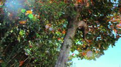 Natural Energy - Colorful Tree 2 Stock Footage