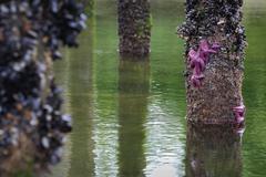 Low Tide Pier - stock photo