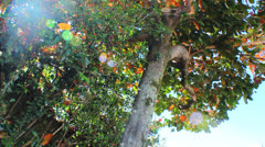 Natural Energy - Colorful Tree 3 Stock Footage