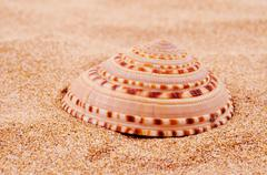 conch on the sand - stock photo