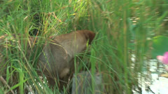 Dog in the grass Stock Footage
