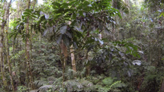 Descending through the rainforest understory in the Ecuadorian Amazon Stock Footage
