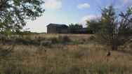 Stock Video Footage of Abandoned farm on Texas prairie