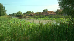 A pond with lilies Stock Footage