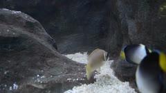 Beautiful fish in aquarium Stock Footage