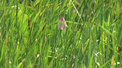 Pink Bud in the grass Stock Footage