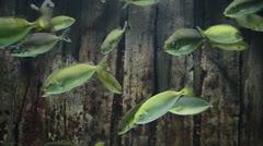 Beautiful fish in aquarium - stock footage
