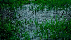 Stock Video Footage of Puddle With Grass During A Hard Rain
