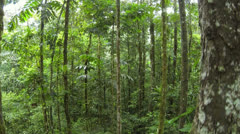 Stock Video Footage of Descending through the rainforest understory in the Ecuadorian Amazon