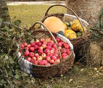 autumn garden goodies - stock photo