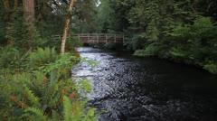 Creek under Foot Bridge in Silver Falls State Park in Silverton Oregon Stock Footage