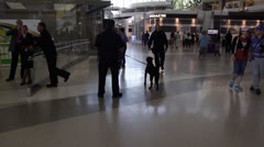 LAX Airport Security K9 - stock footage