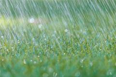 rain is falling on fresh green grass - stock photo
