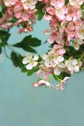 Stock Photo of spring blossom