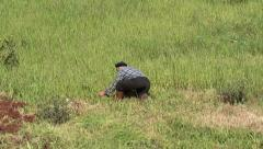 Countryman cutting grass zoom in Stock Footage