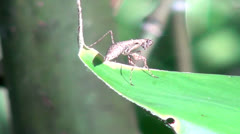 Praying Mantis, Insects, Animals, Wildlife Stock Footage