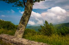Tree and view of the appalachian mountains from skyline drive in shenandoah n Stock Photos