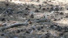 Forest soil with cones and pine needles texture dolly shot, shallow DOF Stock Footage