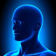 Anatomy Head - Iso View Detail - Blue concept - stock photo