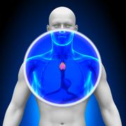Stock Photo of Medical X-Ray Scan - Thymus