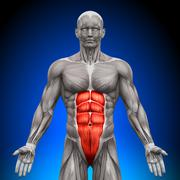 Abs - Anatomy Muscles Stock Photos