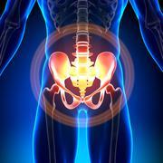 Hip / Sacrum / Pubis / Ischium / Ilium - Anatomy Bones - stock photo