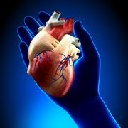 Real Heart in Blue Hand Stock Photos