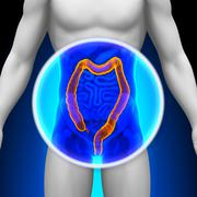 Medical X-Ray Scan - Colon Stock Photos