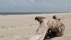 Hatteras Beach Driftwood Stock Footage