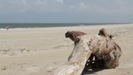 Stock Video Footage of Hatteras Beach Driftwood