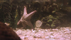 Life of under water Stock Footage
