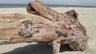 Stock Video Footage of Pan Down Length Of Large Driftwood Chunk