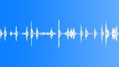 Cockrel, Ducks and Hen Sound Effect