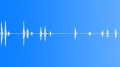 Small Dog Barking 4 Sound Effect
