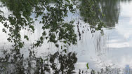 Stock Video Footage of Branches of a birch hang over water