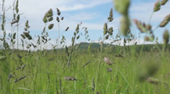 Moving through high grass Stock Footage