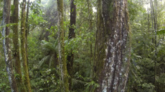 Flying downwards from Philodendron leaves on the trunk of a rainforest tree in t - stock footage