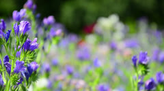 colorful wildflowers on a meadow - stock footage