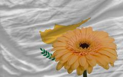 gerbera flower in front  national flag of cyprus - stock illustration