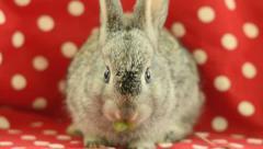 Cutest little bunny Stock Footage