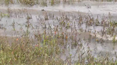 Swamps, Marshes, Bogs, Wetlands, 2D, 3D Stock Footage