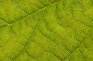 Stock Photo of leaf extreme close up