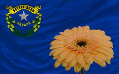 Stock Illustration of gerbera flower in front  flag of american state of nevada
