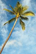 Palm tree with azure blue sky with clouds in background Stock Photos