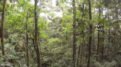 Drifting through the rainforest understory in the Ecuadorian Amazon. Stock Footage