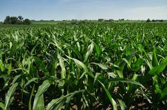 Iowa viljapelto Kuvituskuvat