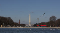 Washington DC Skyline, Monument, National Mall, Seagull, Pool, Double-Decker Bus Stock Footage