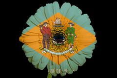 Stock Illustration of gerbera daisy flower in colors  flag of american state of delaware    on blac