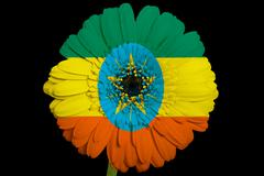 Stock Illustration of gerbera daisy flower in colors  national flag of ethiopia    on black backgro